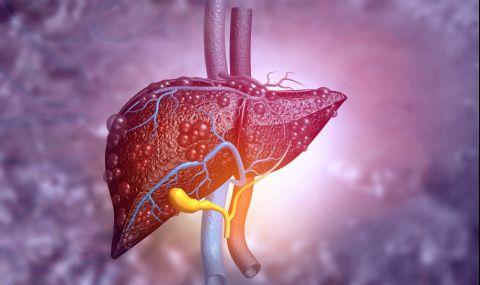 Най-полезните съвети за черния ни дроб