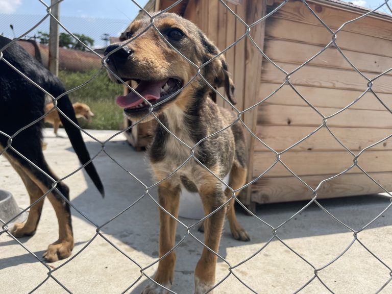 Увеличават се осиновените кучета от  приюта за безстопанствени животни в Ямбол, информират от общината